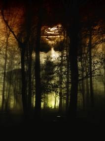 forest_face_fog