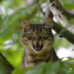 cat-1641959_1920